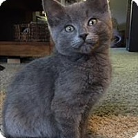 Adopt A Pet :: Wierman K4 Buffy - Sherwood, OR