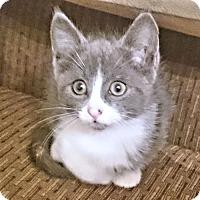 Adopt A Pet :: Ashton - Cherry Hill, NJ