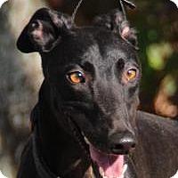 Adopt A Pet :: Kelly - Nashville, TN