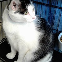 Adopt A Pet :: Mel - Rockville, MD