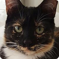 Adopt A Pet :: Meadow - Rochester, MI