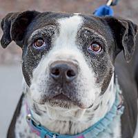 Adopt A Pet :: Grandma - Gilbert, AZ
