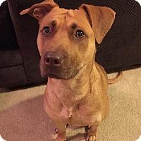 Adopt A Pet :: Hazel - Smithfield, NC