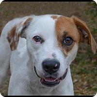 Adopt A Pet :: Ginny - Brick, NJ