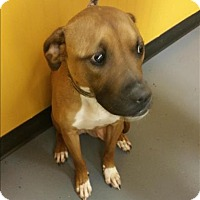 Adopt A Pet :: 16-12-3849 Joey - Dallas, GA