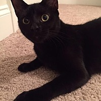 Adopt A Pet :: Kiki- courtesy listing - Baton Rouge, LA