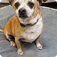 Adopt A Pet :: Stewie - Fennville, MI