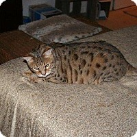 Adopt A Pet :: Stoli & Nayla - Atlanta, GA