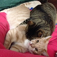 Adopt A Pet :: Willie & Oliver - Harrison, NY