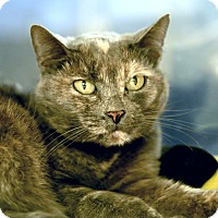 Adopt A Pet :: Josephine - Kettering, OH