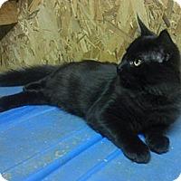 Adopt A Pet :: Justice - Acworth, GA