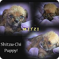 Adopt A Pet :: Mitzi - Spring Valley, NY