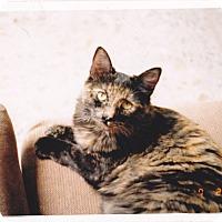 Adopt A Pet :: Princess - Laguna Woods, CA