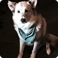 Adopt A Pet :: Regina - Ashland, OR