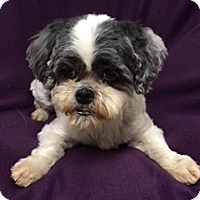 Adopt A Pet :: Indie - Patterson, CA