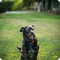 Adopt A Pet :: Harriet Finkleberry - Los Angeles, CA