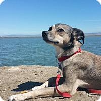 Adopt A Pet :: Giselle - San Francisco, CA