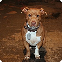 Adopt A Pet :: Tequila - 28 pounds!!! - Los Angeles, CA