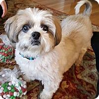 Adopt A Pet :: Wonka - Toronto, ON