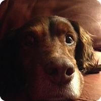 Adopt A Pet :: MI/Blue Moon - Appleton, WI