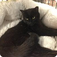Adopt A Pet :: Drools - Bear, DE