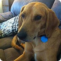 Adopt A Pet :: Buddy - Bellbrook, OH