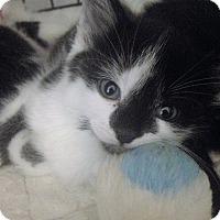 Adopt A Pet :: Sorcha - River Edge, NJ