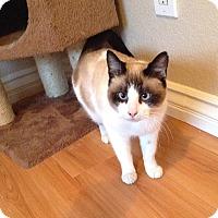Adopt A Pet :: Carmelia - Chino Hills, CA