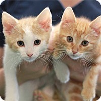 Adopt A Pet :: Grumpy (left) - South Haven, MI
