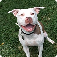 Adopt A Pet :: Maelyn - Dayton, OH