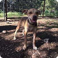 Adopt A Pet :: Ruby - Helotes, TX