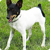 Adopt A Pet :: Coconut - Stockport, OH