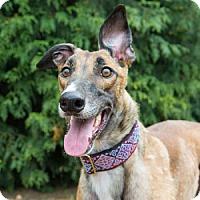 Adopt A Pet :: Tommy - Seattle, WA