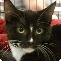 Adopt A Pet :: Heart - Yorba Linda, CA
