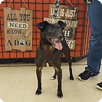 Adopt A Pet :: Springer - Frankfort, IL