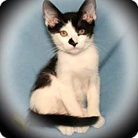 Adopt A Pet :: Scotch Tape - Bradenton, FL