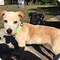 Adopt A Pet :: Mark - Hayes, VA
