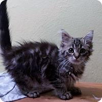 Adopt A Pet :: Eleanor - Chelsea - Kalamazoo, MI