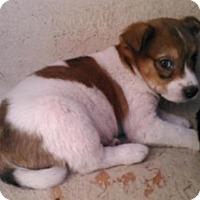 Adopt A Pet :: A410616 - San Antonio, TX