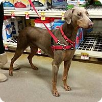 Adopt A Pet :: Josie - Omaha, NE