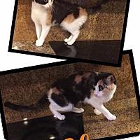 Adopt A Pet :: Elsa - Scottsdale, AZ
