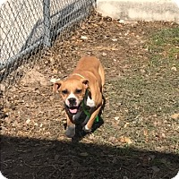 Adopt A Pet :: Thecia Taylor - Austin, TX