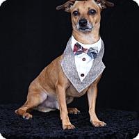 Adopt A Pet :: Tanner - SAN PEDRO, CA