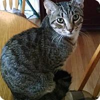Adopt A Pet :: Ashe - Marion, NC