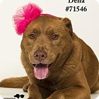 Adopt A Pet :: Della - Baton Rouge, LA