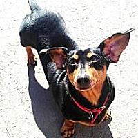 Adopt A Pet :: Rocky - Vaudreuil-Dorion, QC