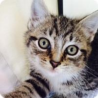 Adopt A Pet :: Dusk - Long Beach, NY