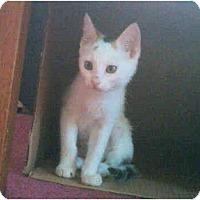 Adopt A Pet :: Skylee - Colmar, PA