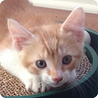 Adopt A Pet :: TIMMY - 2013 - Hamilton, NJ