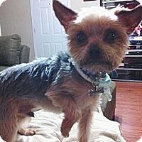 Adopt A Pet :: Cooper - Baton Rouge, LA